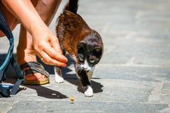 妇女喂养在街道上的一只无家可归的猫 库存照片