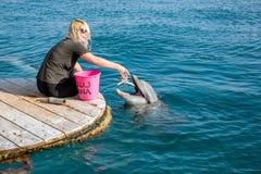 妇女喂养在海滩海豚礁石的一只海豚 图库摄影