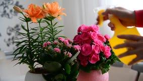 妇女喷洒不同的盆的植物