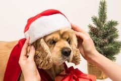 妇女在他的狗上把圣诞老人` s帽子放 免版税库存图片