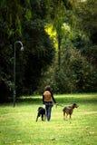 妇女在公园遛两条狗 库存图片