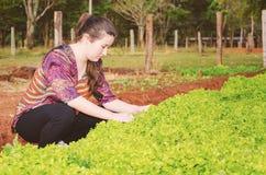 妇女在农场的一个菜园的采摘莴苣 免版税库存照片