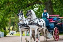 妇女在凯瑟琳宫殿乘坐马支架在圣彼德堡,俄罗斯 图库摄影