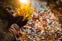 妇女在她手套的手上拿着秋天黄色槭树叶子花束  用桔子叶子报道的地面和温暖 库存图片