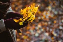妇女在她手套的手上拿着秋天黄色槭树叶子花束  用桔子叶子报道的地面在背景中 免版税库存照片