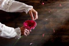妇女在她的手上拿着一朵大丁草花 库存照片