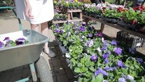 妇女在庭园花木托儿所商店选择花盆 股票录像