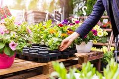 妇女在庭园花木托儿所商店选择花盆 库存照片