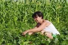 妇女在庭院里采摘青豆 库存照片