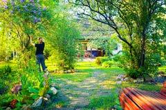 妇女在开花的庭院里打破丁香分支在美好的晴朗的春日 库存照片