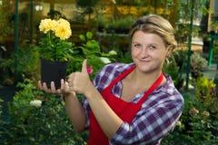 妇女在拿着一朵美丽的黄色花的庭院里 库存图片