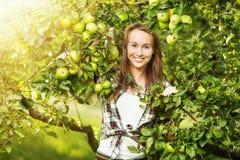 妇女在收获季节期间的一个晴朗的苹果树庭院里 Yo 免版税图库摄影
