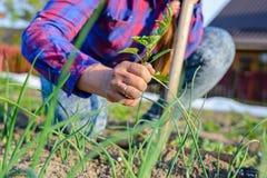 妇女在春天的除草她的菜园 免版税库存照片