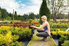 妇女在植物托儿所商店选择伏牛花灌木 库存照片