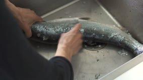 妇女在水槽的cleanin三文鱼 股票录像