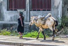 妇女在海地带领沿农村街道的驮马 免版税图库摄影