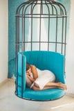 妇女在笼子椅子在家放松 疲乏的女孩白天睡眠笼子椅子的 甜点和舒适梦想,早晨 现代 免版税库存照片