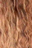妇女头发 免版税库存照片
