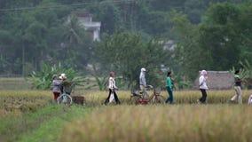 妇女完成工作在Mai的Châu土地 股票视频