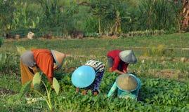 妇女工作在领域的一个小组 免版税库存照片