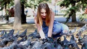 妇女开会哺养鸽子种子 股票视频