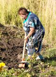 妇女开掘有铁锹的一个庭院 库存图片