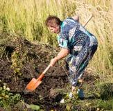 妇女开掘有铁锹的一个庭院 免版税库存照片