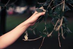 妇女感人的树枝的手 免版税库存照片