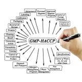 妇女手文字元素GMP-HACCP用于制造业 免版税库存图片