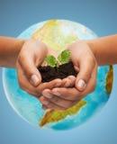 妇女手用在地球地球的绿色新芽 库存照片