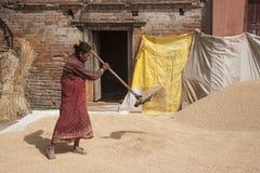 妇女打谷的五谷 免版税图库摄影