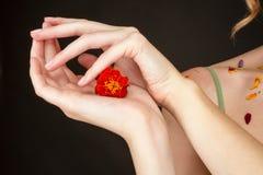 妇女拿着在她的手棕榈的一朵花  图库摄影