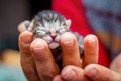 妇女拿着在她的韩的新出生的婴孩` s小的无防御的小猫 免版税图库摄影