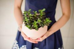 妇女拿着有温室花的一个罐 免版税库存图片