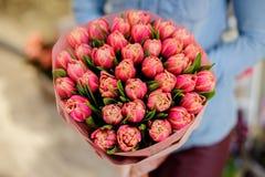 妇女拿着桃红色郁金香美丽的花束  图库摄影