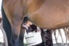 妇女挤奶一匹马 库存图片