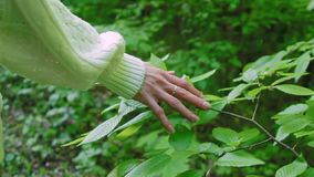 妇女接触叶子的` s手在森林,慢动作里 股票录像