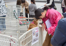 妇女提供收养的一条狗 免版税库存图片