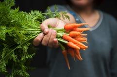妇女提供的嫩胡萝卜 免版税库存照片