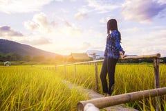 妇女旅客赞赏的黄色米领域风景 免版税库存照片
