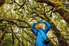 妇女旅行的常青森林 免版税库存照片