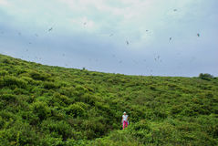妇女是在小山,并且海鸥飞行在它 免版税图库摄影