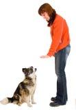 妇女是狗培训 免版税库存图片