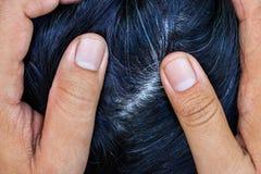 妇女显示她灰色头发根 图库摄影