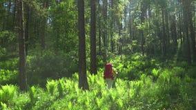妇女有一个红色背包和棍子的旅客跟踪的在木头去 山区 影视素材