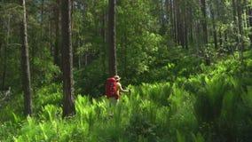 妇女有一个红色背包和棍子的旅客跟踪的在木头去 山区 股票录像