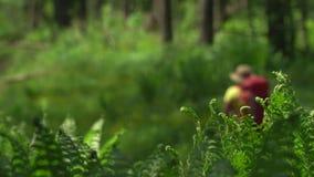 妇女有一个红色背包和棍子的旅客跟踪的在木头去 山区 股票视频