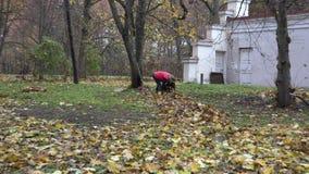 妇女材料干燥叶子到物质大袋里在房子后院 放大 4K 股票录像