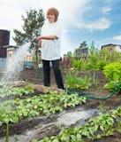 妇女浇灌的庭院床 免版税库存图片