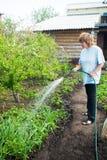 妇女浇灌的庭院床 库存图片